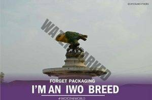 Iwo land breed